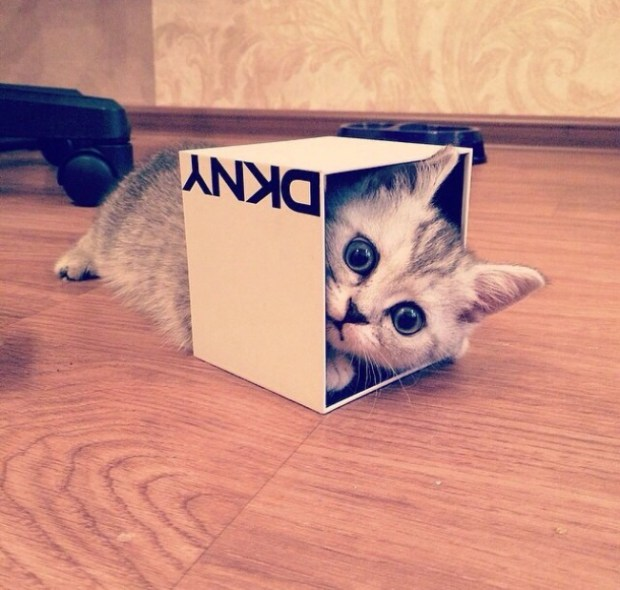 Why Do Cats Love Boxes? 12 Facts About Cat In The Box You Probably Didn't Know