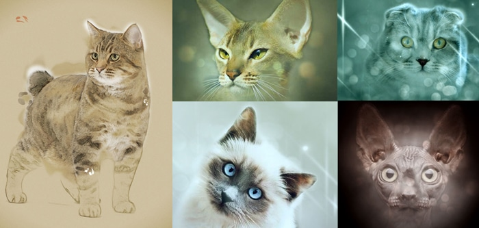 Cat Breeds And Their Personalities