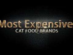 Cat-Food-Brands
