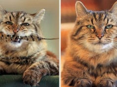 oldest-domestic-cat