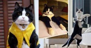 Reasons why Tuxedo cats Rock