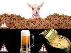 Twenty Foods your cat should never eat