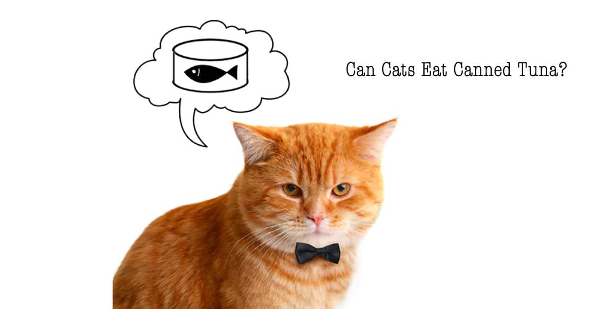 Can-cat-ear-canned-tuna