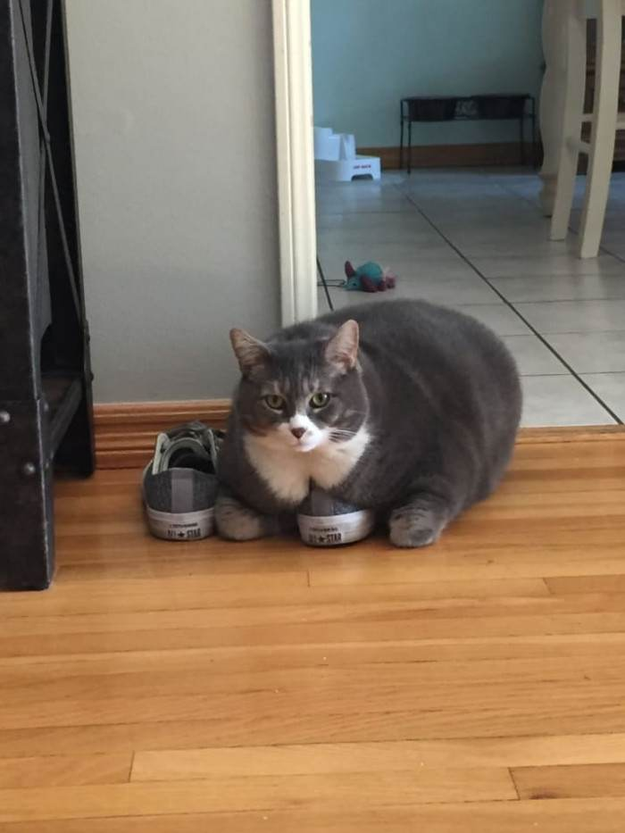 20 Fat Cats That You Will Certainly Wish To Cuddle Right now